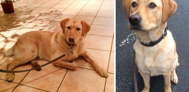 Therapiehund Lola